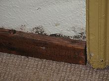feuchtigkeit wand in schleswig holstein nbg. Black Bedroom Furniture Sets. Home Design Ideas
